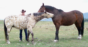 Ohms Horse & Hound Massage Service Dundee & Friend