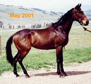 Ohms Horse & Hound Massage Service Keona in May